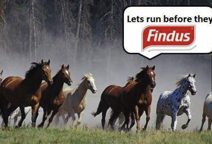 hestekjøtt